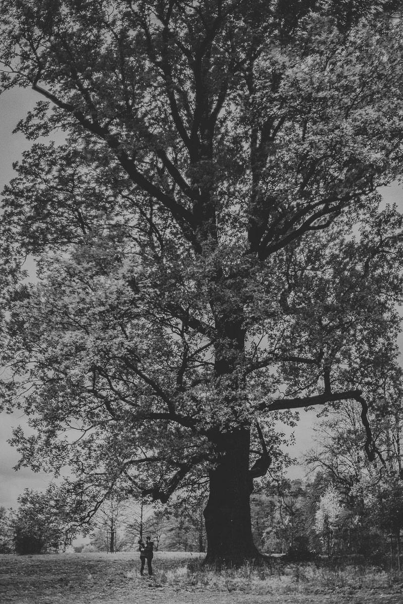 sesja jesienna poslubna Bukowiec mala para na tle ogromnego drzewa